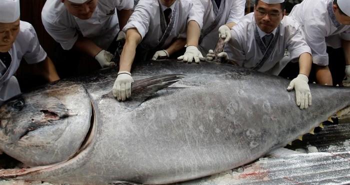 Калорийность, виды и состав мяса тунца