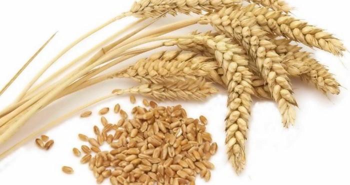 Как варить молочную пшеничную кашу