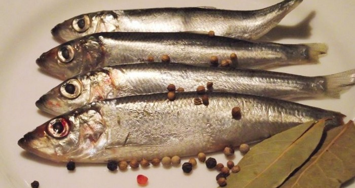 Салака в кулинарии