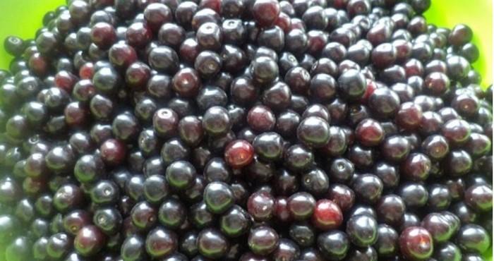 промывка плодов